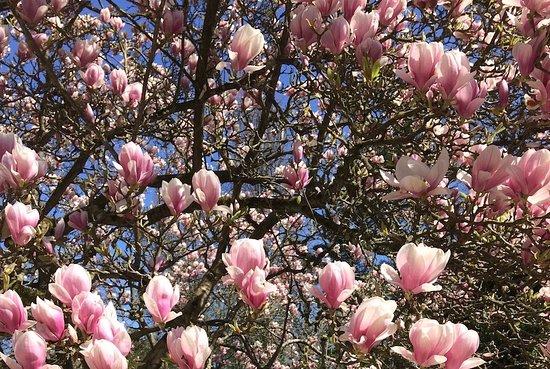 Kornik, Polen: Magnolia