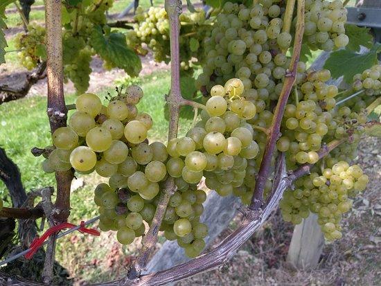Biddenden, UK: The Vineyards