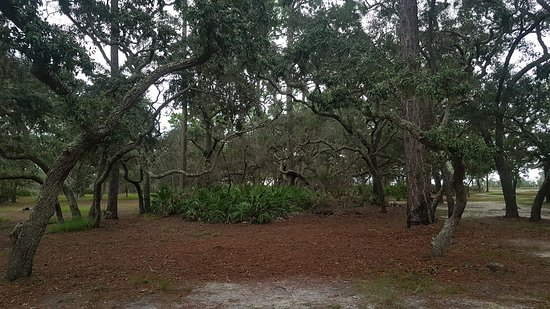 Sopchoppy, Flórida: Knarly trees