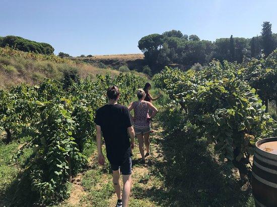 Alta Alella: vineyards