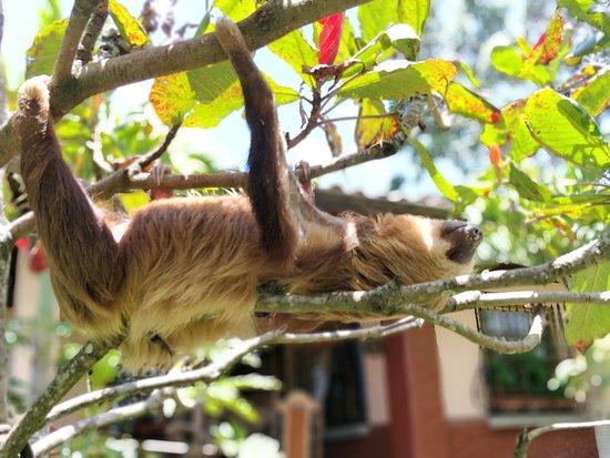 San Isidro, คอสตาริกา: Fuffy Sloths