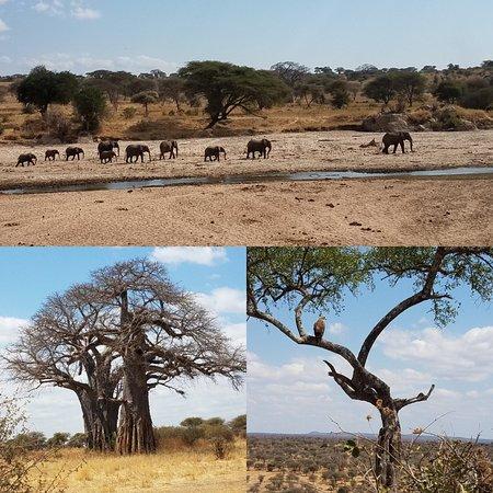 Tarangire National Park, Tanzania: IMG_20180903_194925_large.jpg