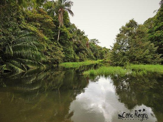 """Cano Negro, Costa Rica: Sitio conocido como """" Los teñideros"""" / Part of the Caño Negro wetland called """" Los Teñideros"""""""