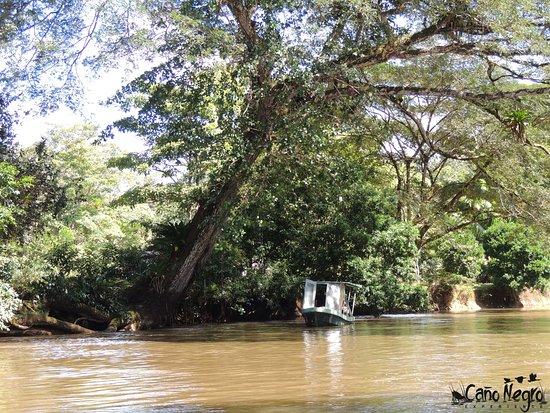 Cano Negro, Costa Rica: Recorrido en bote / Boat tour