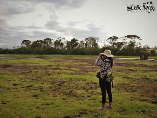 Cano Negro, Costa Rica: Recorrido en época seca / Dry season tour