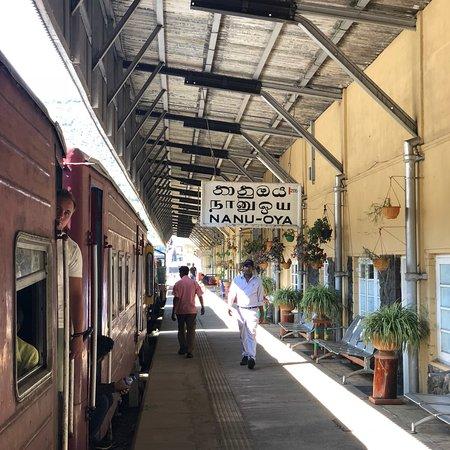 Nanu Oya, سريلانكا: photo2.jpg