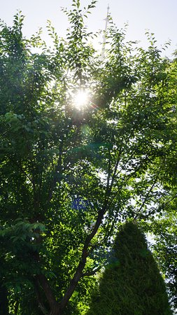 Alisher Navoi National Park: Солнце в ветвях