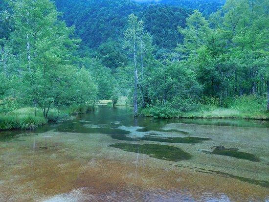 美しい田代池 - 松本市、田代池の写真 - トリップアドバイザー