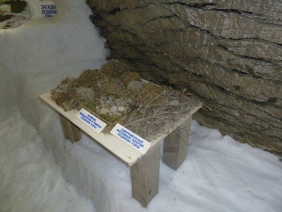 Igarka, Russia: Pflanzen-Test