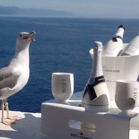 Al Faro di Portofino Lounge Bar: Frank... The seagull!!!