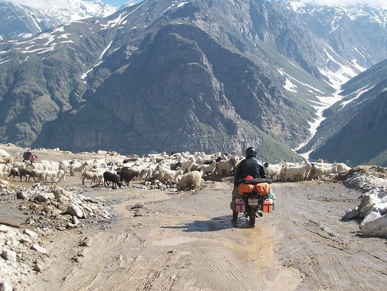 Sarchu, India: Don't you love traffic jams like these? That's enroute Leh from Manali. Wanna join us? Check out our website for more details!