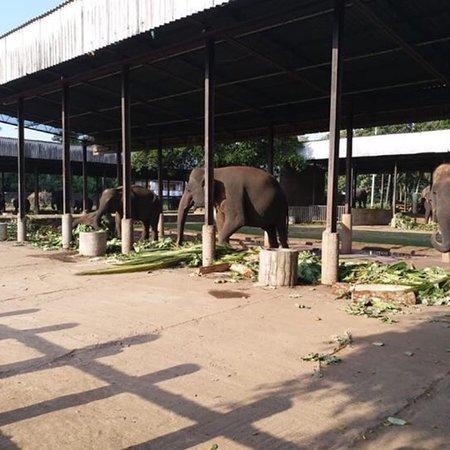 Pinnawala Elephant Orphanage: photo7.jpg