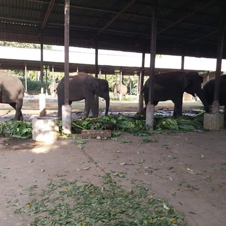 Pinnawala Elephant Orphanage: photo8.jpg