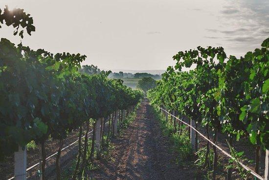 Vinicola Santa Elena