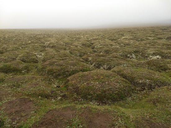 Krafla Lava Fields: Rocas cubiertas de musgo