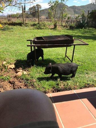 Bonnievale, Zuid-Afrika: IMG-20180912-WA0030_large.jpg