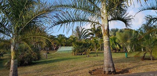 Parc des Palmiers : 20180909_171035_large.jpg