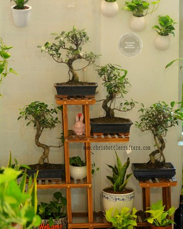 Muvattupuzha, Indien: Chris bottle Crafters indoor home garden