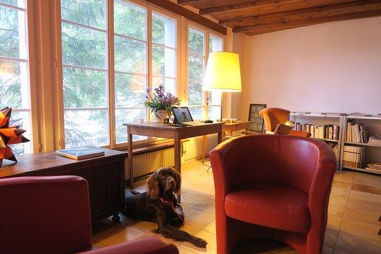 Amsteg, Szwajcaria: Rustige ruimte met uitzicht, en luie stoelen om op je gemak een boek te lezen.