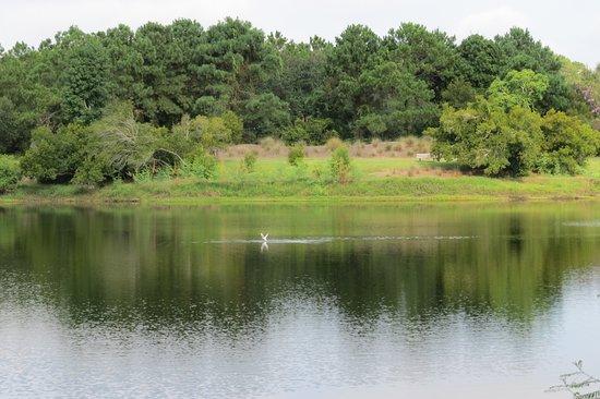 Jarvis Creek Park