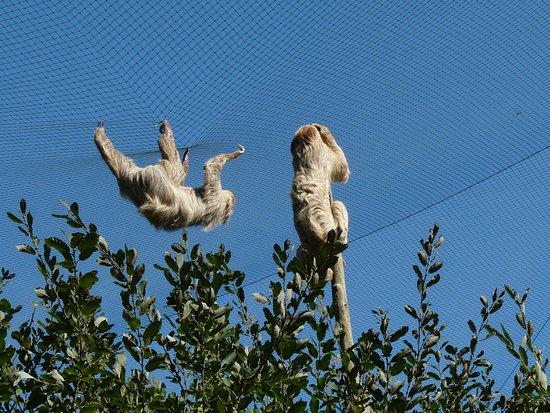 Pleugueneuc, France: Les paresseux en promenade