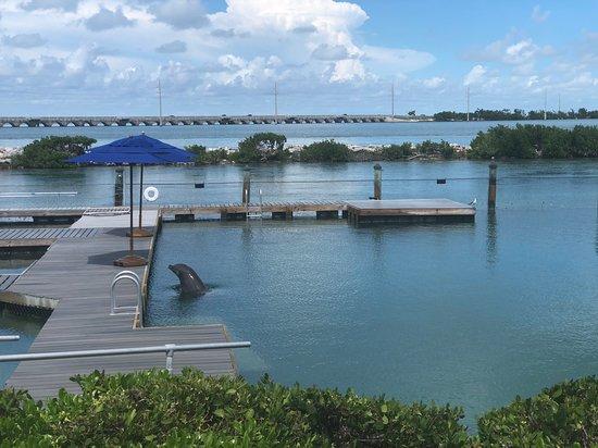 Foto de Dolphin Connection