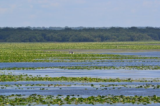 view of lilies in the Mississippi River adjacent to the Linger Longer Rest Area near Montrose Io