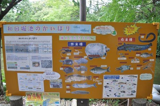 和田堀公園, かいぼりの成果を掲示板で発表