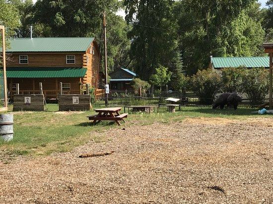 Encampment, WY: Bear Trap Cafe & Bar