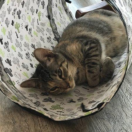 Bilde fra Happy Cat Cafe