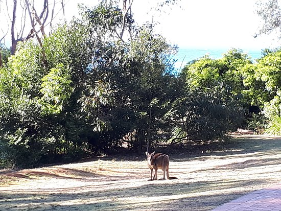 Shoalhaven, Australien: Greeting us as we got out of the car
