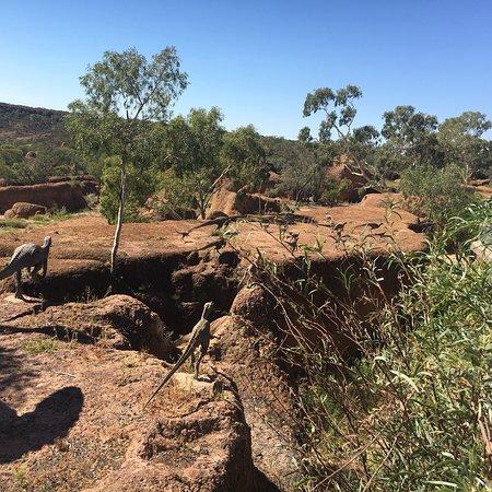 Australian Age of Dinosaurs: photo0.jpg