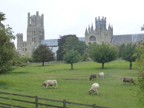 Ely Cathedral: View from the public grounds over the meadows.