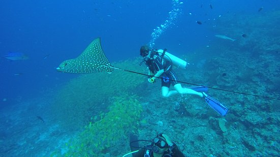 Island Divers: Eagle ray