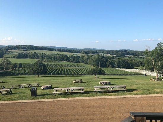 Arrington, Теннесси: View from the deck towards the vines