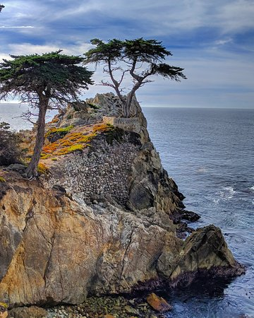 Lone Cypress Is A Monterey Tree In Pebble Beach California