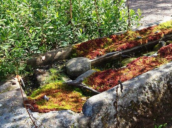 Jardin d'altitude du Haut Chitelet: magnifique