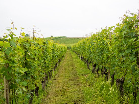 Scarlet & Hues: Vines at Cadia