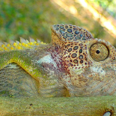 Berenty Private Reserve, Madagascar : photo3.jpg