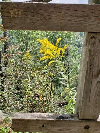 Linville Falls: 20180908_132656_large.jpg