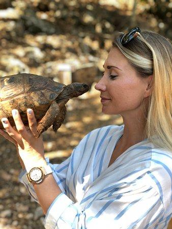 Volimes, Greece: Черепаха