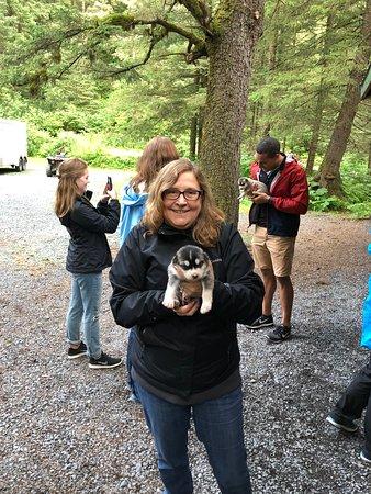 Seavey's IdidaRide Sled Dog Tour