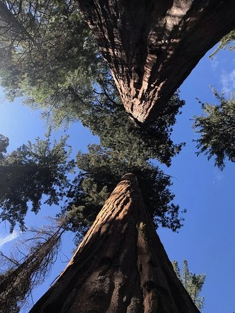Bear Valley, CA: Nearby Calaveras State Park