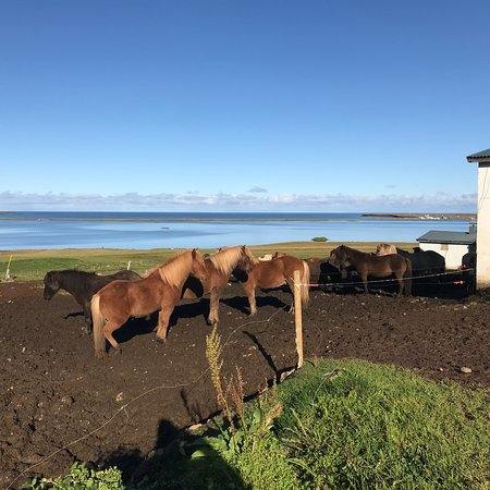 Skagafjordur, Islandia: photo6.jpg