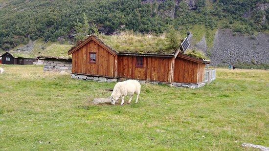Norddal, Norwegia: Sheep Grazing - Herbal Farm