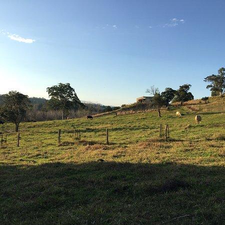 Clunes, Australia: photo4.jpg