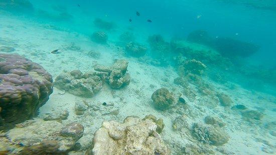 Simizu Island صورة فوتوغرافية