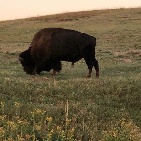 Custer State Park: photo8.jpg
