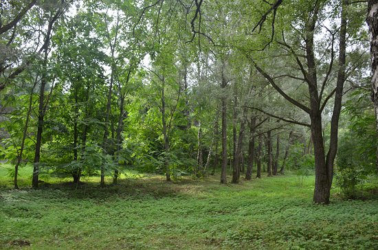 Pereslavskiy Arboretum Named After S.F. Kharitonov