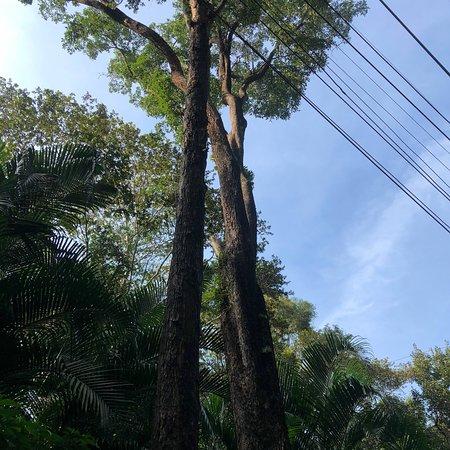 Phu Phan, Tailândia: บรรยากาศดี แต่เดินไกลมากๆ มาหน้าหนาวได้จะดีมาก